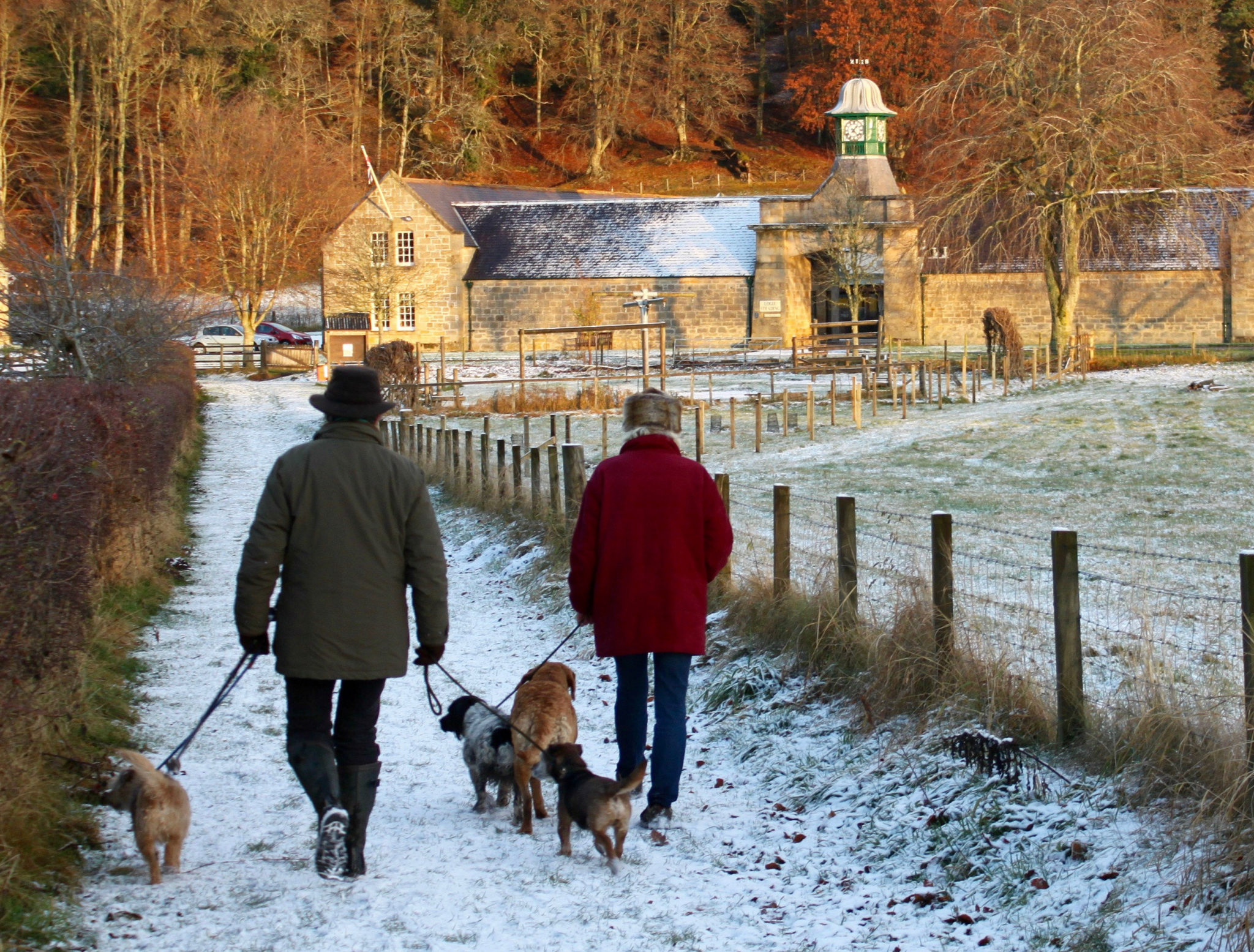 Dog walking in the snow at Logie Steading
