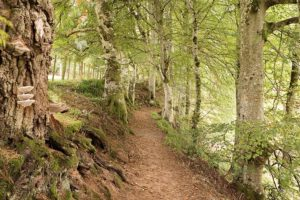 Walks from Logie Steading