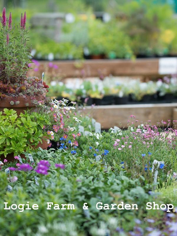 Logie Farm and Garden Shop
