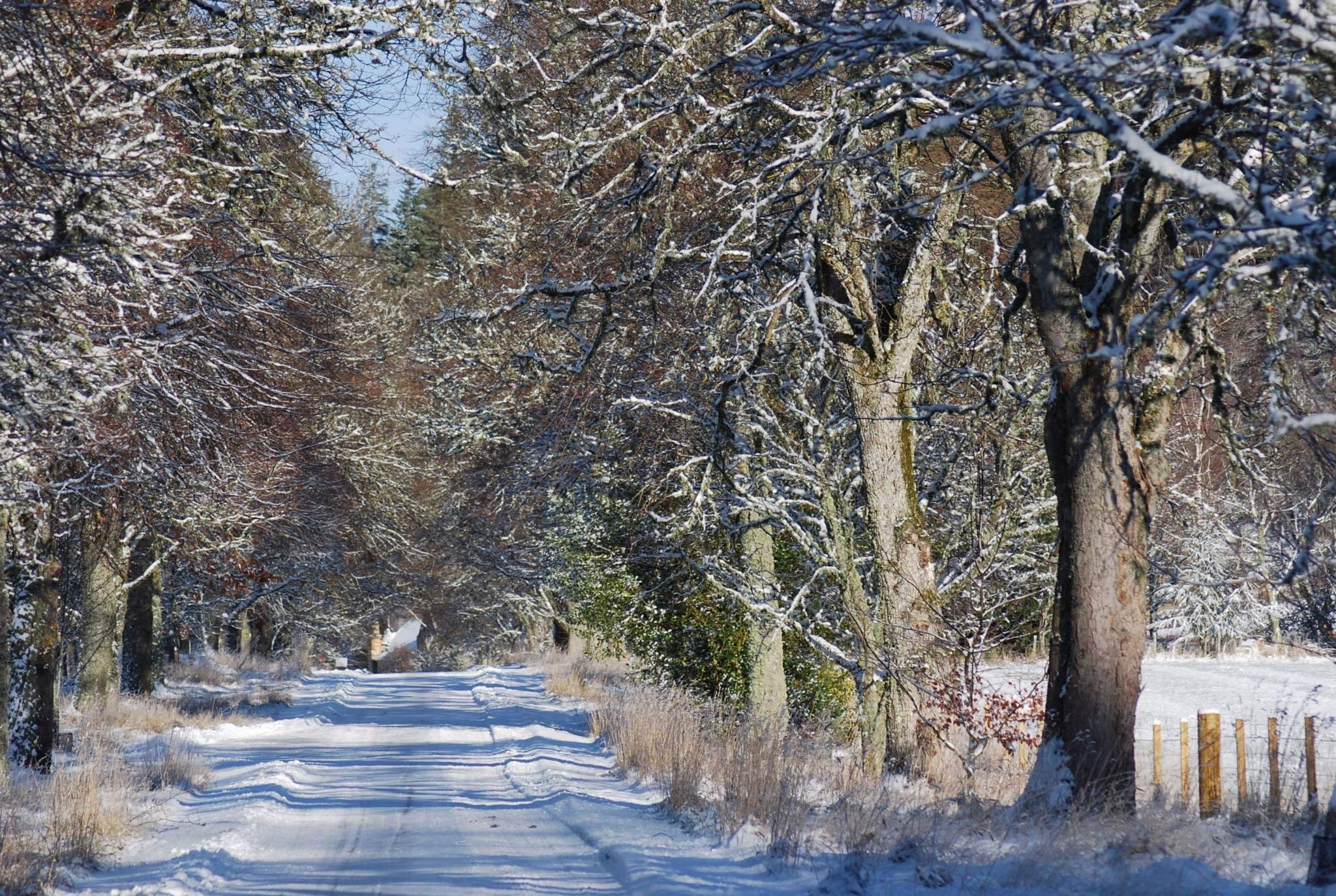 Logie Steading drive in the snow