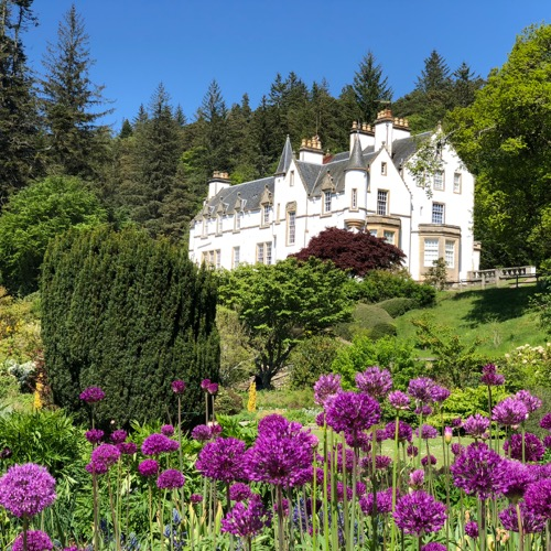 Logie House Garden with alliums
