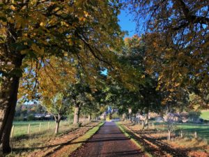 Logie Steading drive in Autumn