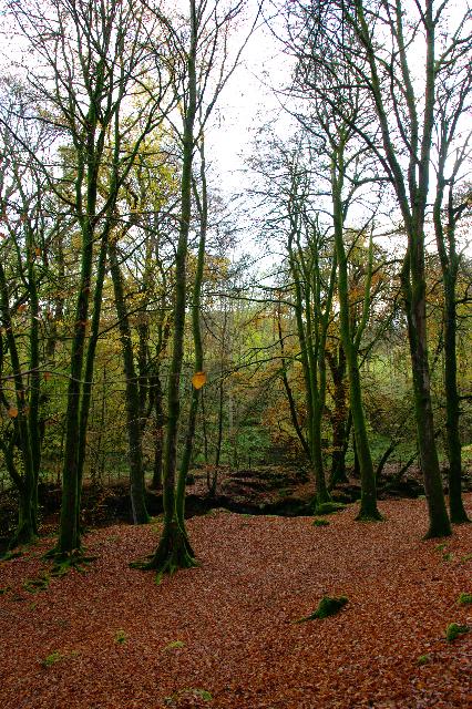Tez autumn photography woods