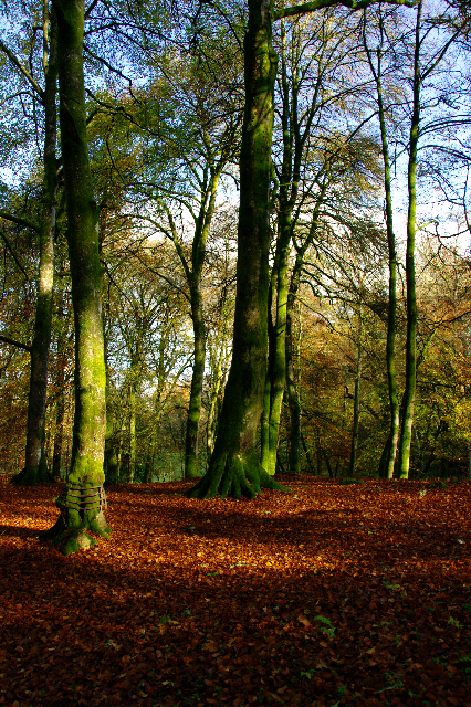 Autumn photography tips by Tez of Iolaire