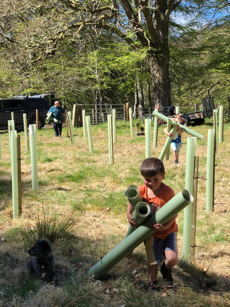 planting trees at covid copse