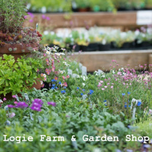 logie farm and garden whats here