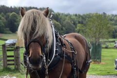 Tarzan, the horse of Highland Horse Loggers was the star of the show