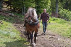 Tarzan & Simon of Highland Horse Loggers were a hit