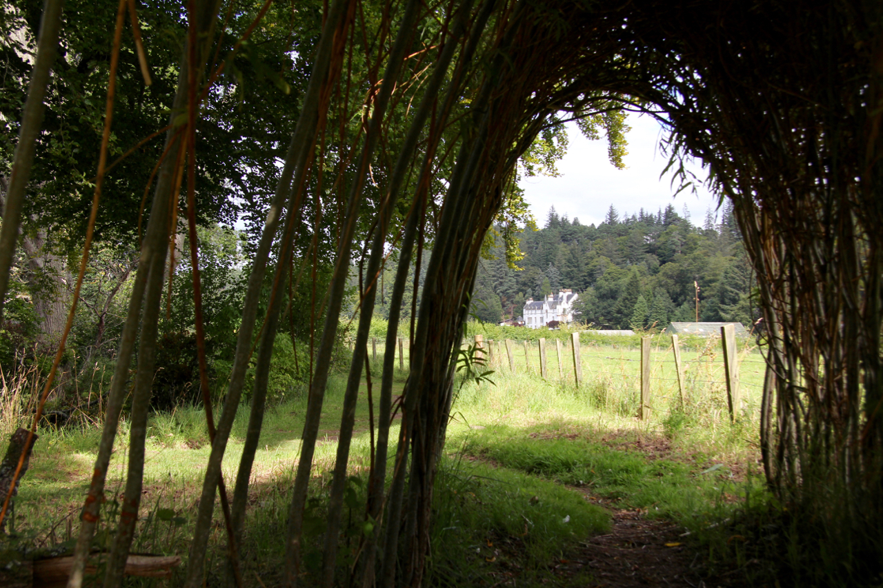 Logie house through the willow on a walk from Logie Steading: Logie House through the willow arch