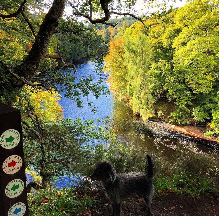 the Lookout dog walking along the River Findhorn from Logie Steading
