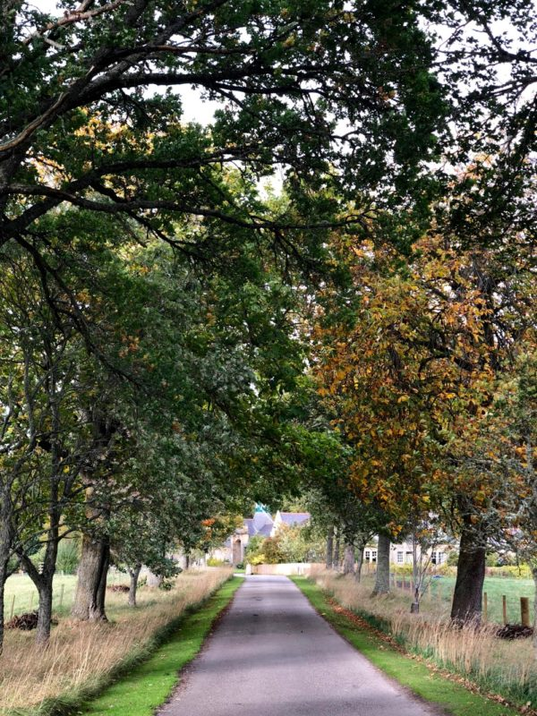 Logie Steading drive in early Autumn