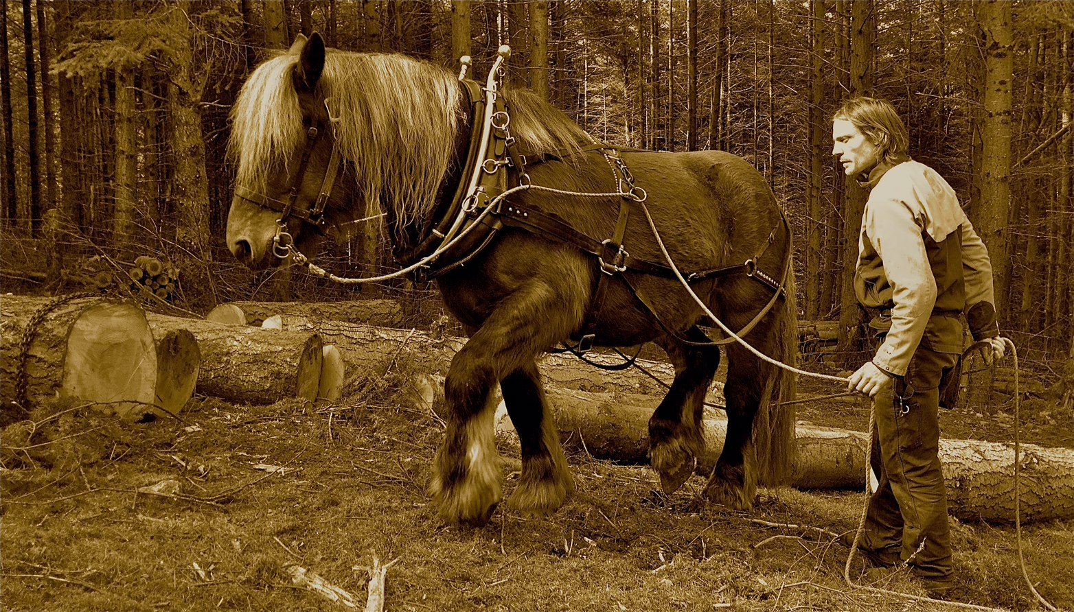 Highland Horse Loggers are coming to Logie Timber Festival 2019