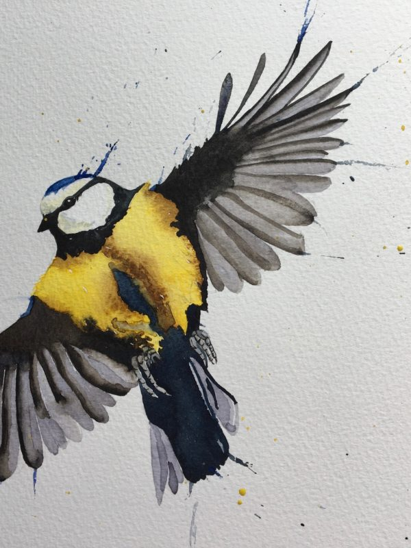 blue tit by jackie hichens