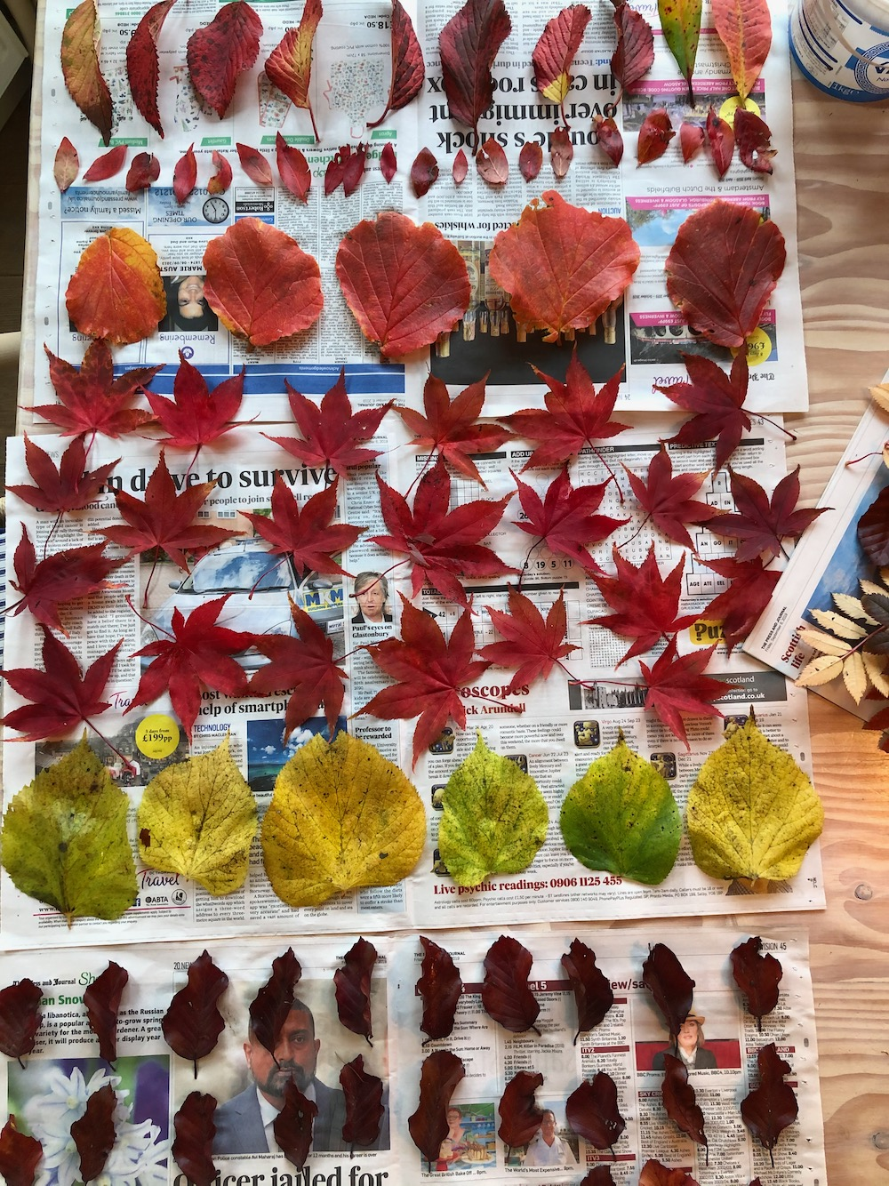 junos autumn leaves collection