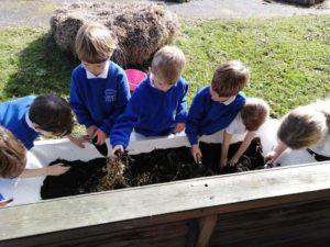 Logie School children planting tatties