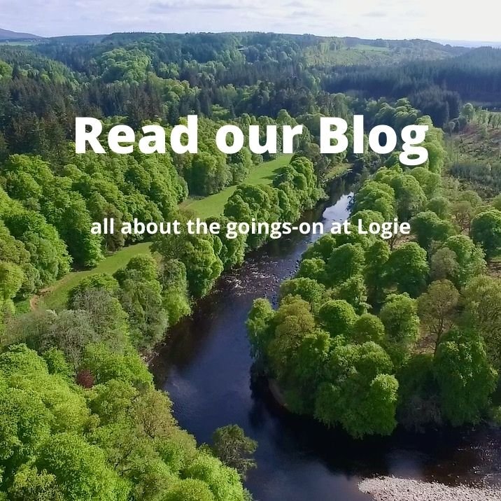 Read our blog - all about the goings-on at Logie